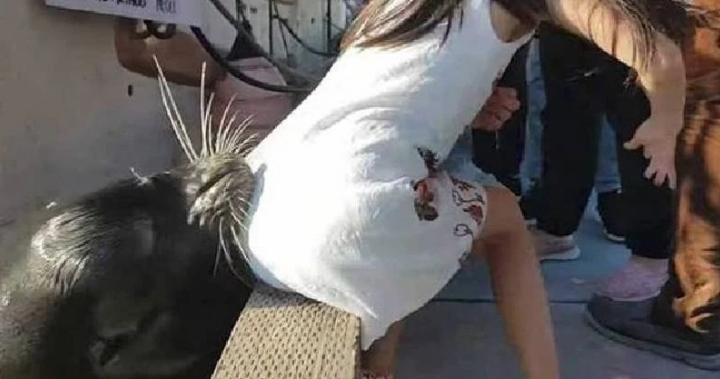 [影]驚險!中國女遊客加國違規逗海獅,遭咬屁股拖下水!(youtube) -[第一次沒咬中又坐了下去?囧]