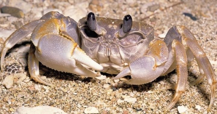 被螃蟹誤當生蠔 女沙灘裸曬陰部被夾傷 | 即時新聞 | 20170527